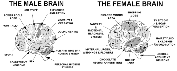 a right brained wife vs a So the next time your wife left brain vs both the right amygdala has more connections with areas of the brain that control external functions.