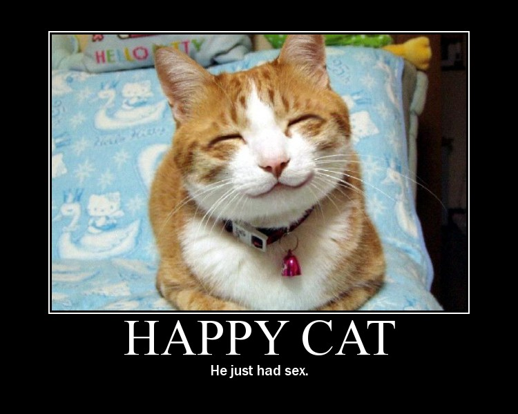 Be happy like this cat.